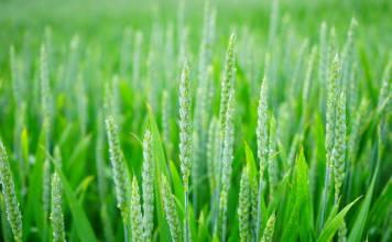 Maszyny rolnicze POM AUGUSTÓW – gwarancja jakości i funkcjonalności!